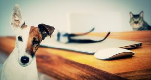 Tips for Renting With Pets in Australia